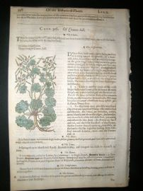 Gerards Herbal 1633 Hand Col Botanical Print. Cranes Bill, Egyptian Codded Mallow